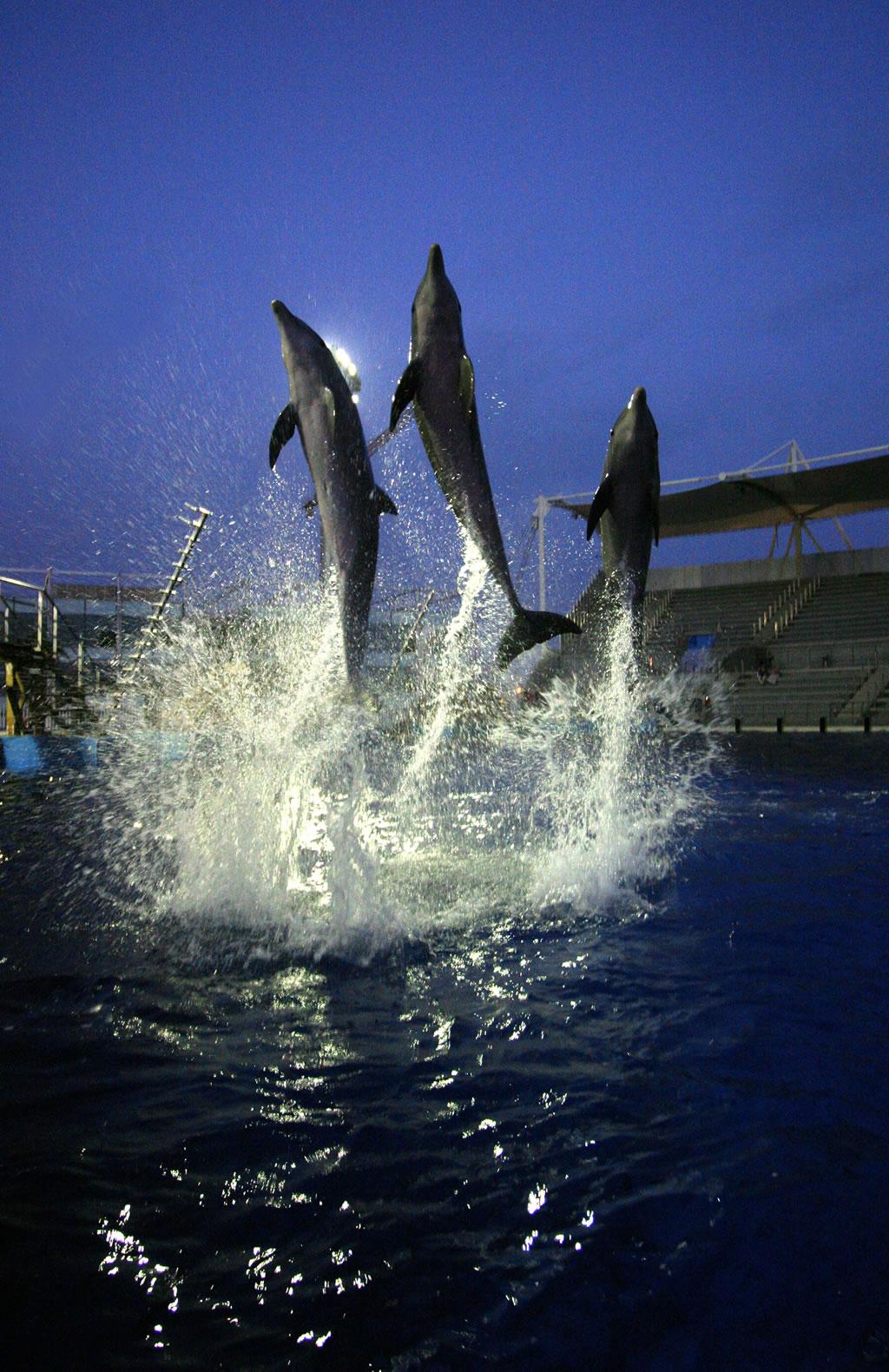 De Delfines