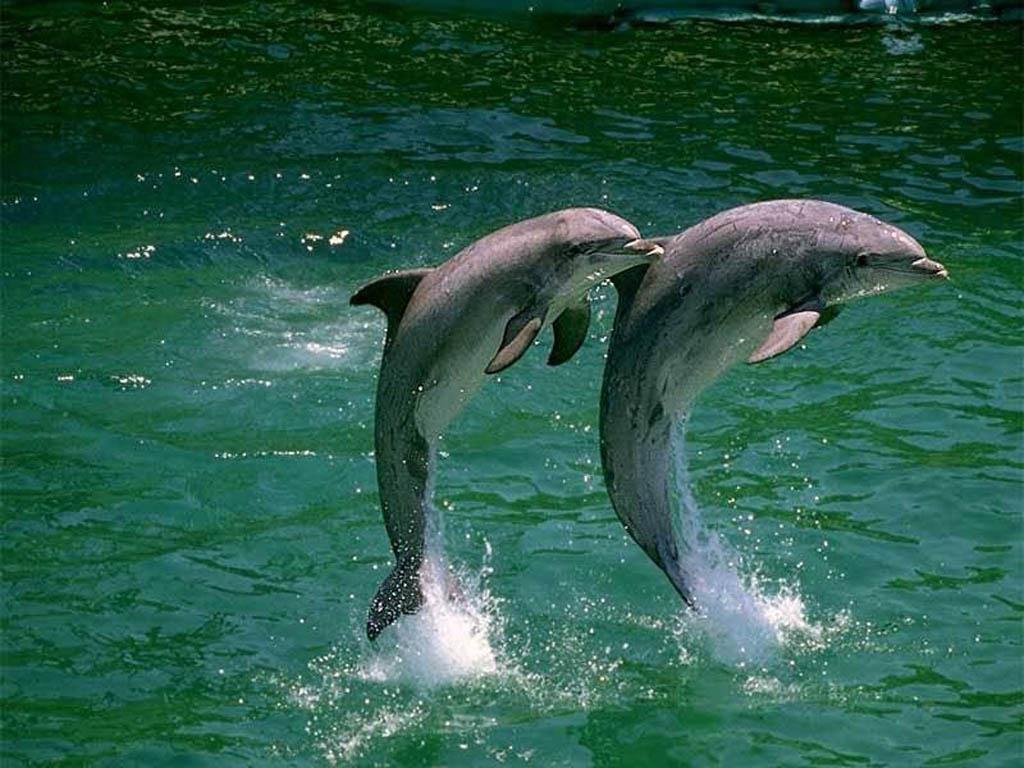 fotos-de-delfines11.jpg