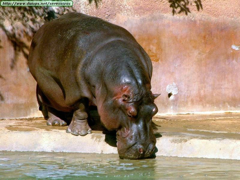 FOTOS DE ANIMALES